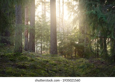 Pathway through the hills of majestic evergreen forest. Mighty pine, spruce trees, moss, plants. Finland. Soft golden sunset light. Idyllic autumn scene. Nature, seasons, environment, ecotourism - Shutterstock ID 1935021560