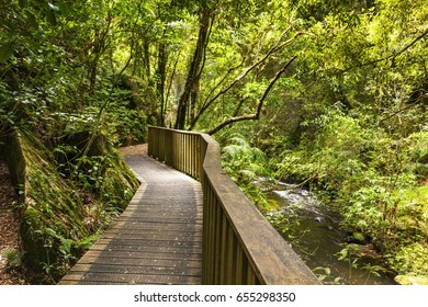 Pathway through New Zealand native bush, Mangapohue Natural Bridge, Waitomo District, Waikato, New Zealand.