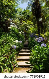 Pathway through parc / garden