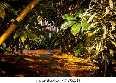 Pathway through a tropical greenhouse