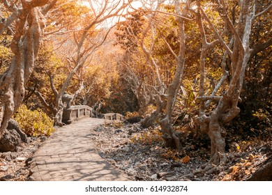 Pathway with trees beside way in warm sunshine (autumn concept)