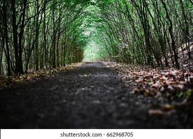 Pathway with trees like arcs