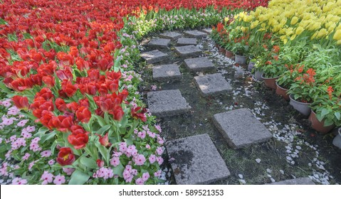 Pathway with tulip flowers in the garden add beautiful accent in spring