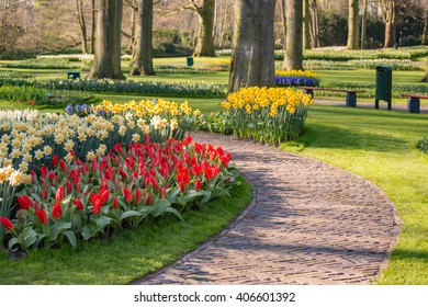 Pathway with tulips