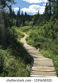 Pathway in the woods in Labrador, Canada