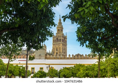 The Patio de Banderas, in the shape of an old neighborhood patio, is located within the surroundings of the Reales Alcázares of the Spanish city of Seville.