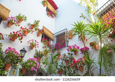 Patio full of flowers in Cordoba, Spain in summer