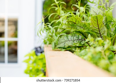 Patio plants. Primarily vegetables located in a rooftop container.