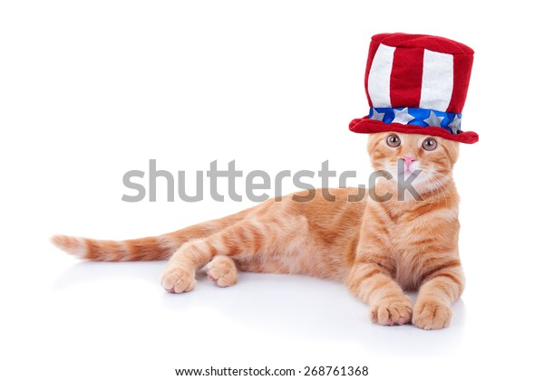 Patriotic American pet cat wearing Uncle Sam hat for 4th of July or Memorial Day. Fourth of July or Labor Day.