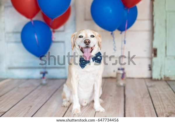 Patriotic Dog in a bowtie and balloons