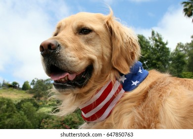 Patriotic Golden Retriever Dog