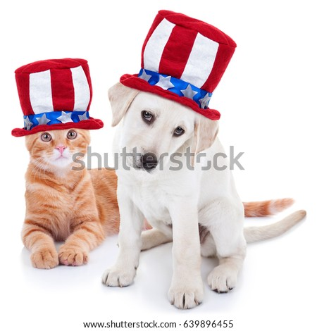 67d5bc0d07b Patriotic happy American pet kitten cat and puppy dog animals wearing red  white and blue Uncle Sam flag hat for July 4th