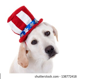 Patriotic Labrador retriever puppy dog isolated on white with copy space