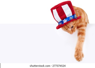 Patriotic pet cat and sign or banner for July 4th