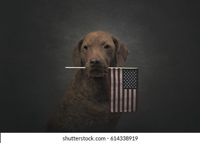 Patriotic Retriever Holding an American Flag