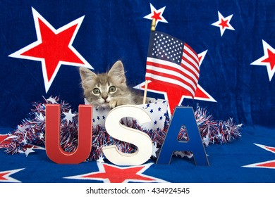 Patriotic tabby kitten, blue background with red stars outlined in white, kitten sitting in white box with blue stars and tinsel with red white blue U.S.A. blocks in front of him her, flag held high