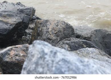 Pattani Beach Stone