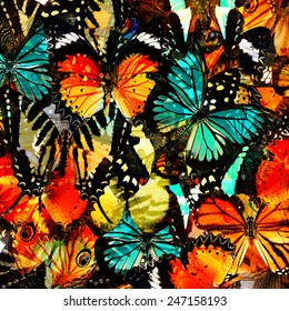 Pattern, Beautiful abstract background texture made from  Colorful butterfly upper wing profile