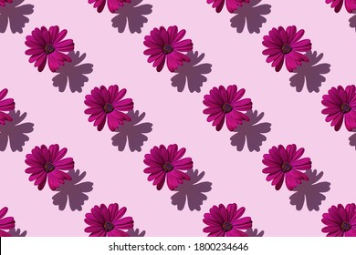 pattern of a beautiful purple flower Dahlia on soft purple background. Minimal flowers concept in hard light with shadows. Abstract backdrop. Top view, flat lay.