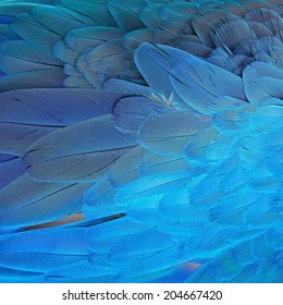 Pattern blue bird feathers, Blue and Gold Macaw feathers, texture background