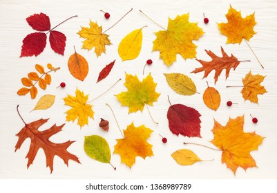 Pattern of colorful autumn leaves on a white wooden table. Flat lay, top view. concept of autumn mood
