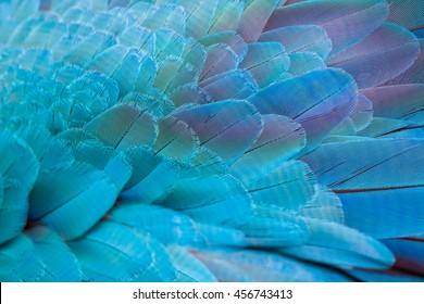 Pattern of colorful feathers