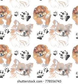 pattern - companion dog