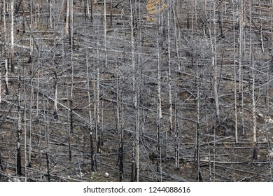 the pattern of dry old forest