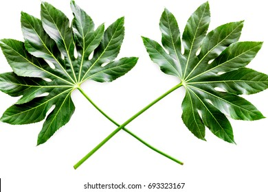 Pattern of exotic plant's leafs on white background top view