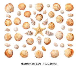 Pattern of exotic sea shells and starfish isolated on white background. Flat lay, top view.
