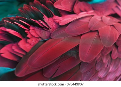 Pattern of feather for background