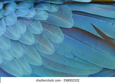 Pattern of feather, Closeup feather