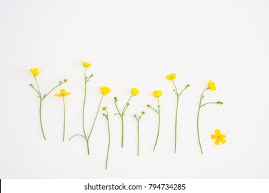 Pattern of flowers Ficaria verna on a white background