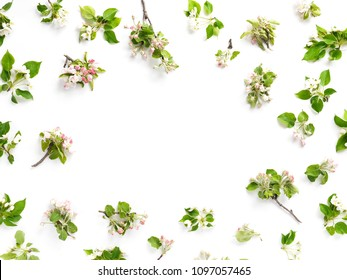 Pattern of a frame of flowers of an apple tree, branches of a blossoming apple-tree on a white background, top view, flat layout. concept spring, summer, Mother's Day holiday, March 8.
