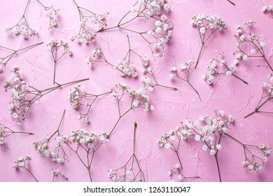 Pattern from fresh white gypsofila  flowers on  pink textured background. Top view. Flat lay.