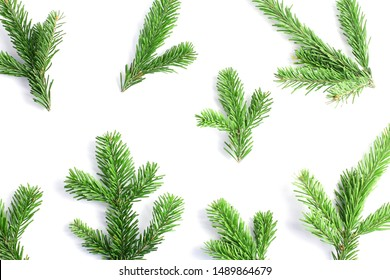 pattern of green fresh spruce branches on a white background. holiday concept, top view
