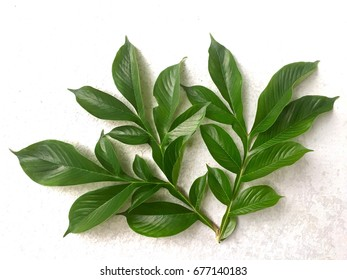 pattern of green leaf Konjac on concrete background For decoration your green frame