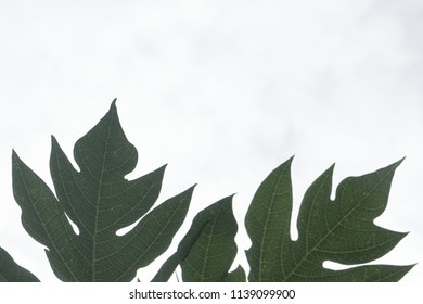 Pattern of green leaves with copy space