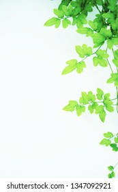Pattern of green leaves on light green background with copy space