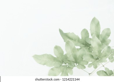 Pattern of green leaves on white background with copy space