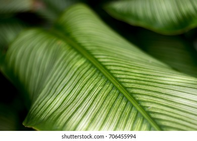 The pattern of green leaves taken by the focus to blur. To make the image look soft. soft and select focus .