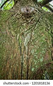 Pattern of Green Moss on Tree Bark 2