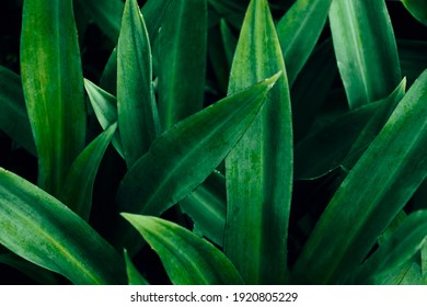 Pattern of leaves or green plants with close-up distance for natural background and wallpaper concept