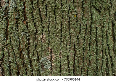 Pattern of lichen moss and fungus growing on a bark of a tree in forest. Different types of old trees growing in a wood.