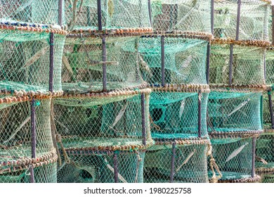 Pattern made of green traps used in Portugal to catch octopus and crabs