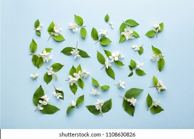 Pattern made of jasmine flowers and leaves on pastel blue background. Flat lay, top view.