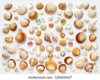 Pattern made of shells, nacre pieces and glass pebbles on white background. Flat lay, top view