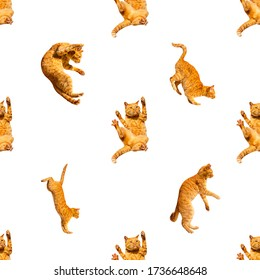 pattern of many ginger flying jumping, dance funny cats isolated on a white background, set collage.