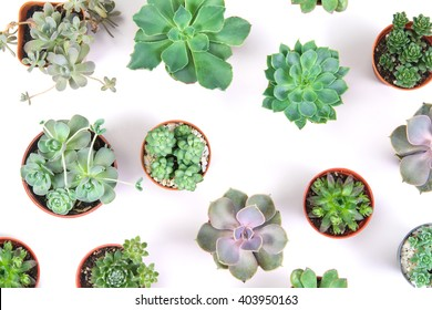 pattern of mixed succulents plant in pot pattern on white background , overhead or top view