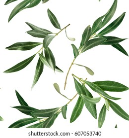 A pattern with olive tree branches on white background